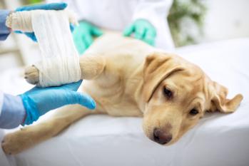 serviços veterinarios